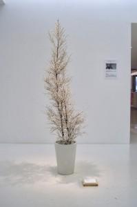 きれいな木と思いきや